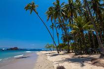 Palm-trees-fringe-a-tropical-beach-3223
