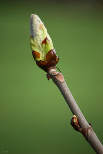springtime! ... awakening I von meleah