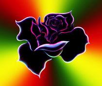 Rose 1 von Walter Zettl