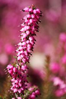 springtime! ... pink, pinker, pinkest III von meleah