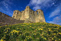 Warkworth Castle in Spring von David Pringle