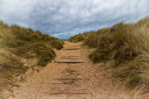 Path to the Sea by David Pringle