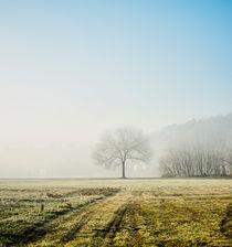 lonely tree von Emanuele Capoferri
