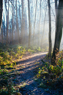 sunbeams in the forest by Emanuele Capoferri