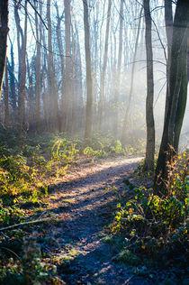 sunbeams in the forest von Emanuele Capoferri