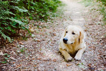 dog in the wood by Emanuele Capoferri