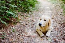 dog in the wood von Emanuele Capoferri