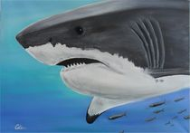 Carcharodon carcharias by Jürgen Lang