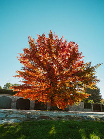 tree with autumn colors by Emanuele Capoferri