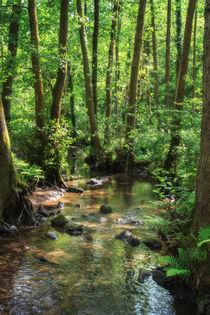 Summer Stream by David Tinsley