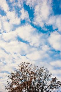 clouds on the tree von Emanuele Capoferri