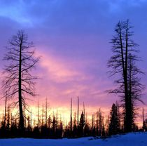 Cariboo Blue Hour by will-borden