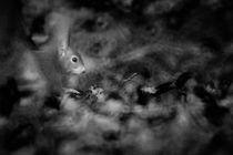Mitten im Wald  von Barbara  Schreiber