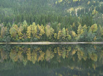 Forest Reflections by Andreas Charitonos