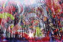Natur Abstrakt 4 by Walter Zettl