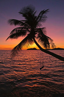 palmtree by sunset von Barbara Brolsma