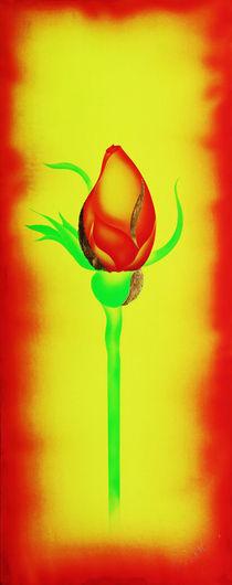 Rose 4 by Walter Zettl