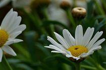 Flowers von leddermann