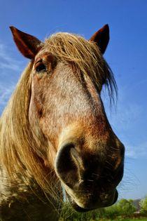 Portrait eines Pferdes von leddermann