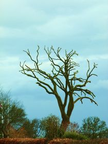 Einsamer Baum von Corinna Schumann