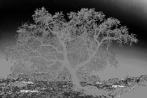 Surreal Oak Tree by Sally White