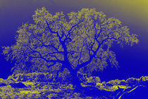 Colorful Oak Tree by Sally White