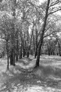 Country Path in Black and White by Sally White