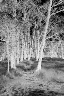 Ghostly Country Path by Sally White