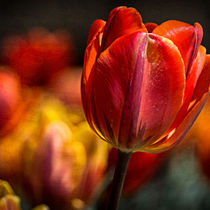 A Blaze of Color by Jon Woodhams