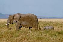 Elephants in the Serengeti National Park von Matilde Simas