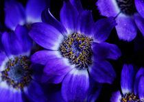 flower violet by emanuele molinari