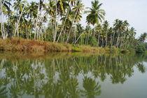 Backwaters, Kerala by lewin