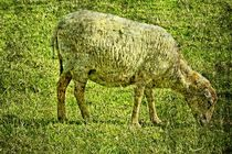 Sheep - Schaf von leddermann