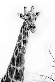 Namibian Giraffe in the Namib   von Matilde Simas