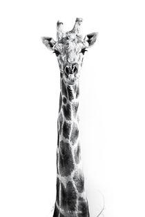 The Namibian Giraffe in the Namib #2 von Matilde Simas