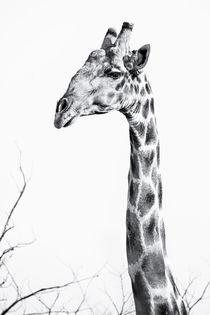 The Namibian Giraffe in the Namib #3 von Matilde Simas