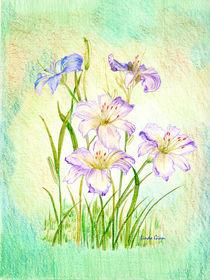 Carmen Renee Day Lilies by Linda Ginn