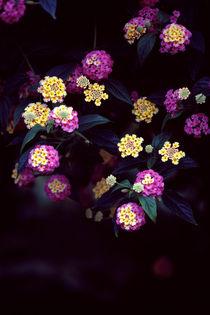 740-bouquet-130366-002-v-7-v-13-v-22