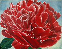 Pfingstrose rot von Lidija Kämpf