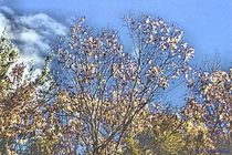 Transcendental Trees von Dan Richards