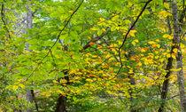 Golden Leaves by John Bailey