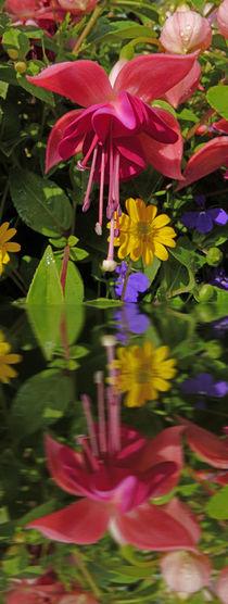 Fuchsia  flower in reflection von Robert Gipson