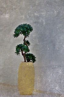 Pflanze-001-c6000-1