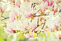 Magnolien by AD DESIGN Photo + PhotoArt