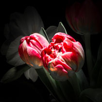 rote Tulpen by Thomas Lambart
