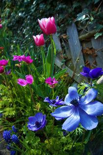 Gartenblumen im Frühling von framboise