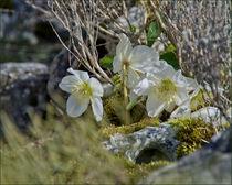 Im Frühlingslicht von lisa-glueck