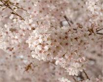 Frühlingswonne von lisa-glueck