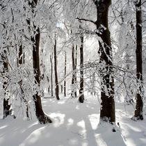 Bäume im Gegenlicht von Rainer Rombach