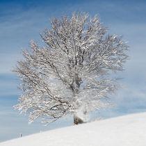 Winterlicher Baum von Rainer Rombach